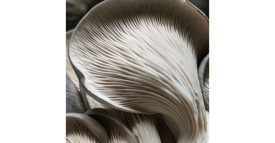 Oyster Mushrooms (1/2 lb) from Vitruvian Farms in Madison, WI